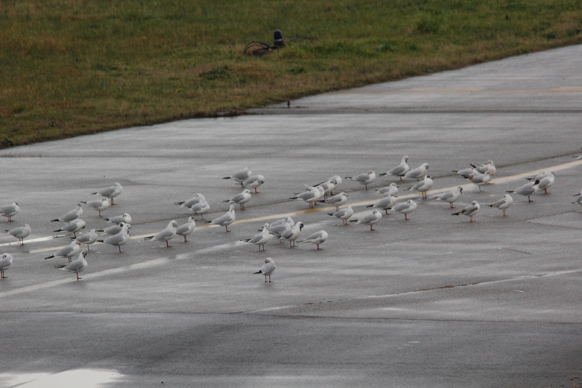 Aeroport Cannes-Mandelieu , LFMD , Février 2015 349608IMG5772