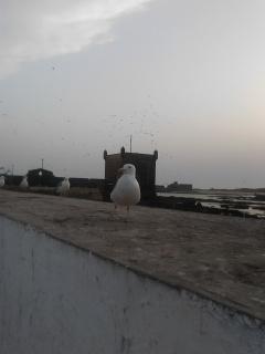 Essaouira.... 35067920120819205430