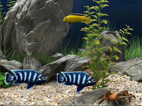 أجمل شاشة توقف لحوض أسماك كاملة مع صوت الماء Dream Aquarium 355124DreamAquarium2