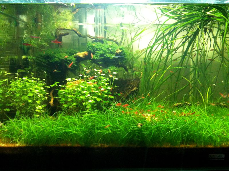 Mon Scaper's Tank 50L Aquascaping - Page 2 359274IMG0777