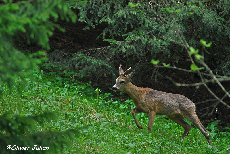 Quelques photos animalières.. 366895DSC4566