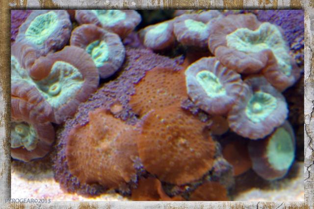 Le récifal de PYROGEAR en  images 368906IMGP6068modifi1