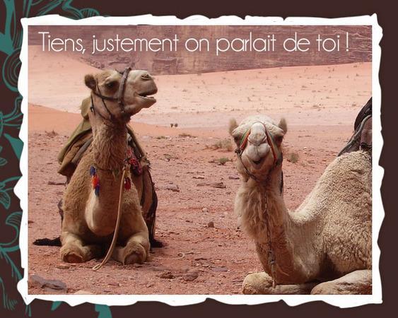 HUMOUR - Drôles de bêtes... - Page 17 369389C01cartedromadaire04
