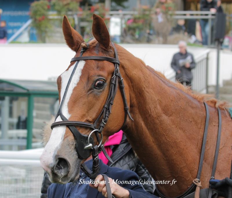 Photos Auteuil 17-04-2016 371116IMG0246