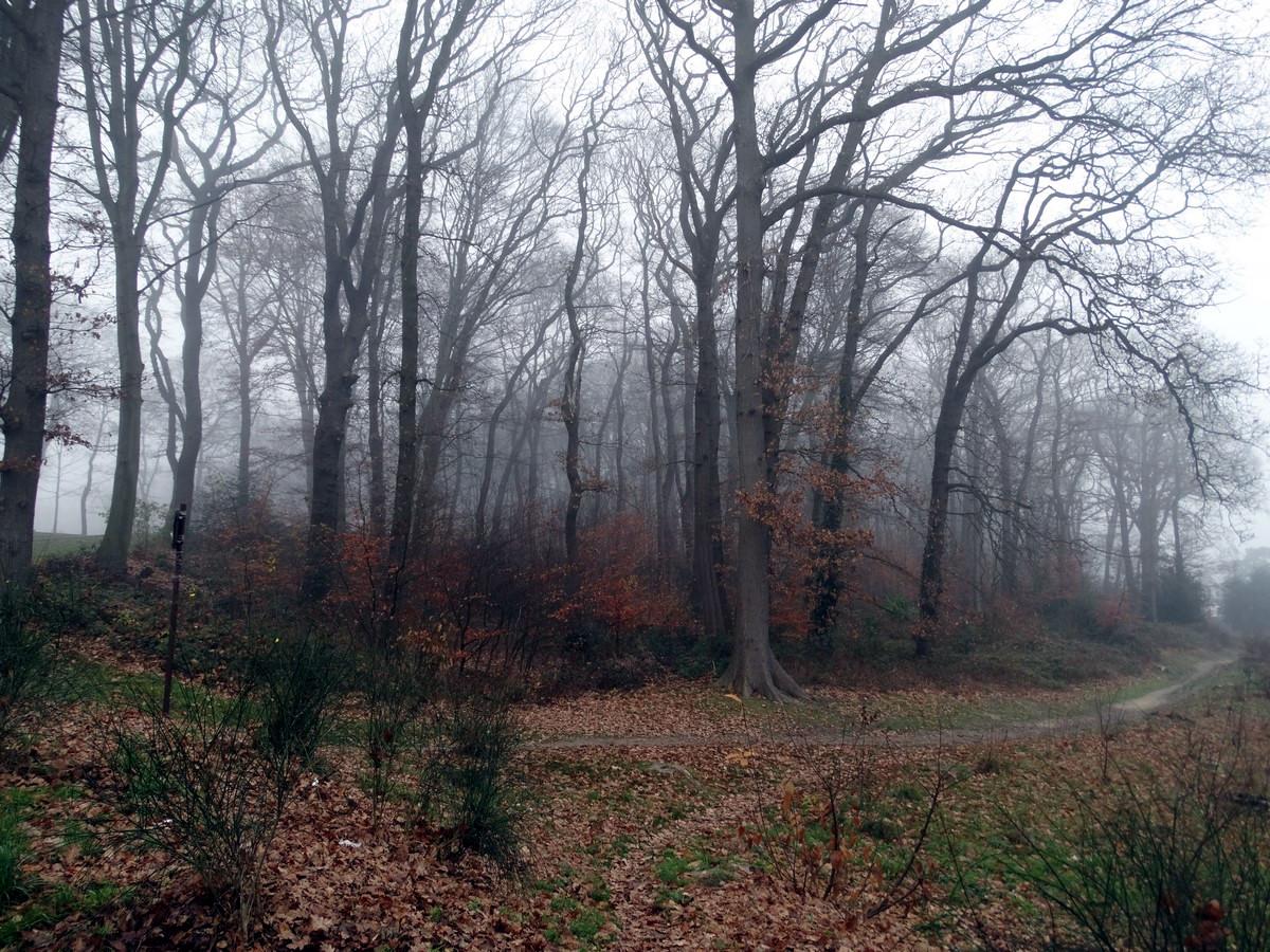 [fil ouvert] la forêt dans tous ses états - Page 11 374418751