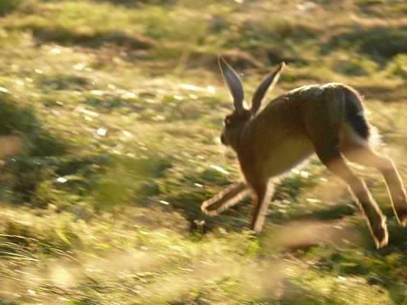 Belles photos d'animaux c'est ici !  - Page 6 376626CopiedeP1070156
