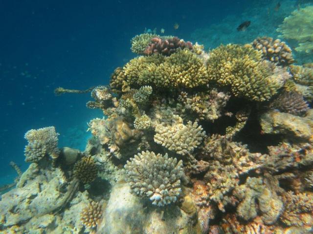 Quelques photos de mes dernières vacances (Maldives) 377901IMG2850