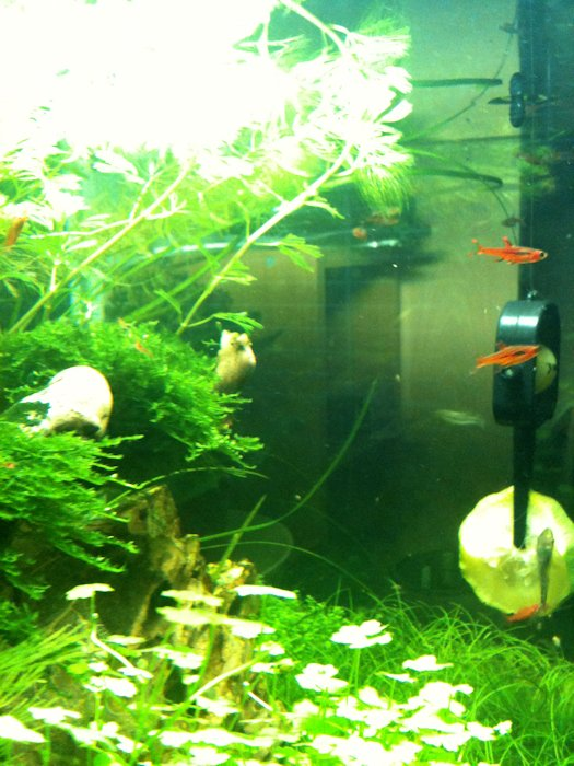 Mon Scaper's Tank 50L Aquascaping - Page 2 380512IMG0497