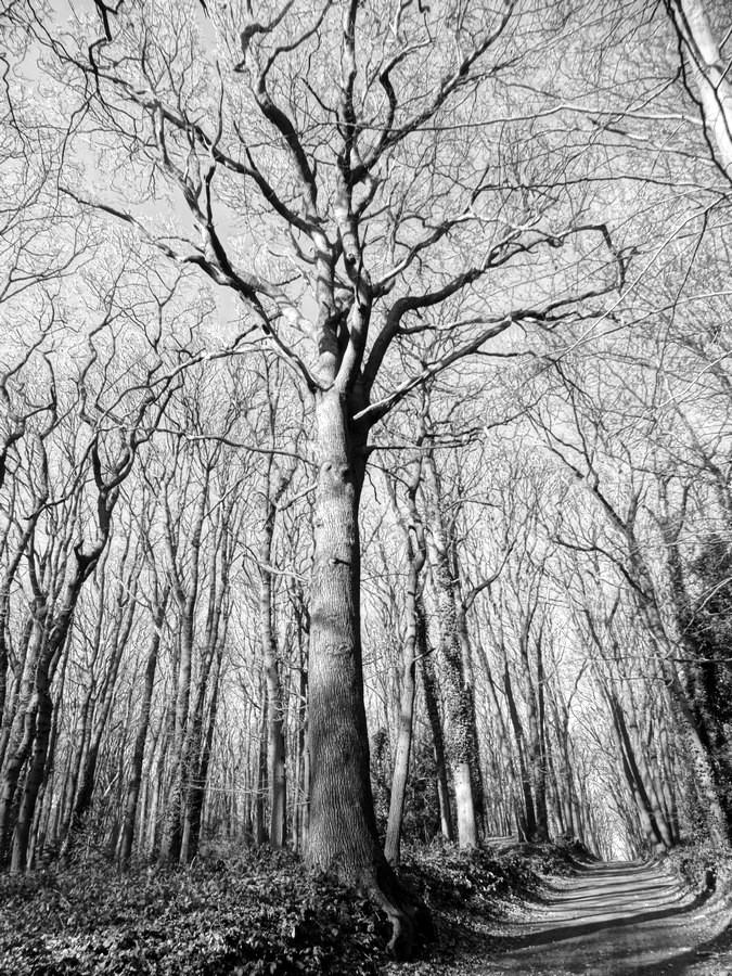 [fil ouvert] la forêt dans tous ses états - Page 13 383289006Copier