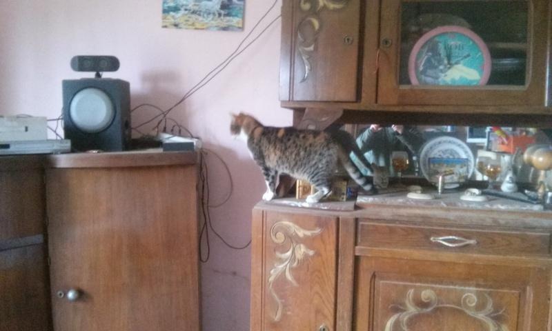 DUCHESSE - chatte femelle, née 2011/2012, borgne - (PASCANI) - adoptée par Chantal Pascal (dpt 63) - Page 4 38657320151206115527
