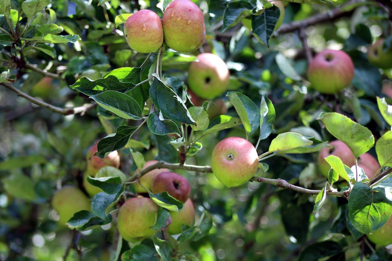 [Fil ouvert] Fruit sur l'arbre - Page 9 388681015Copier