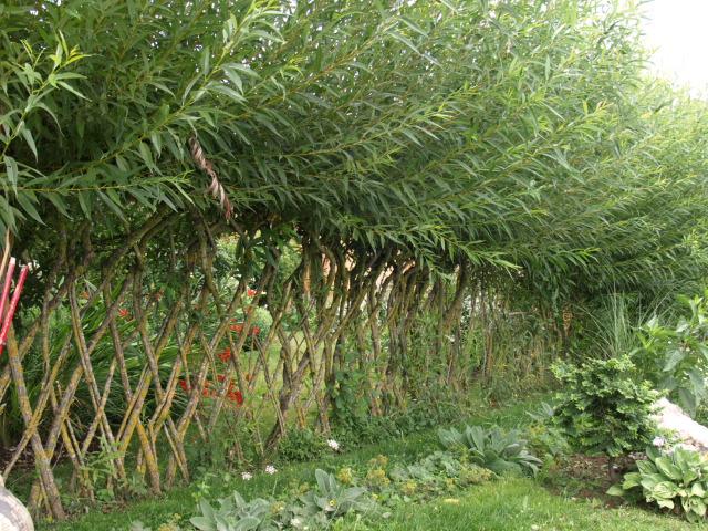 le jardin des plantes du mourot 389394P7202014