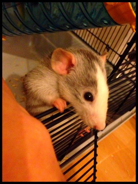 Les ratons de Niort ! 390306liloo1