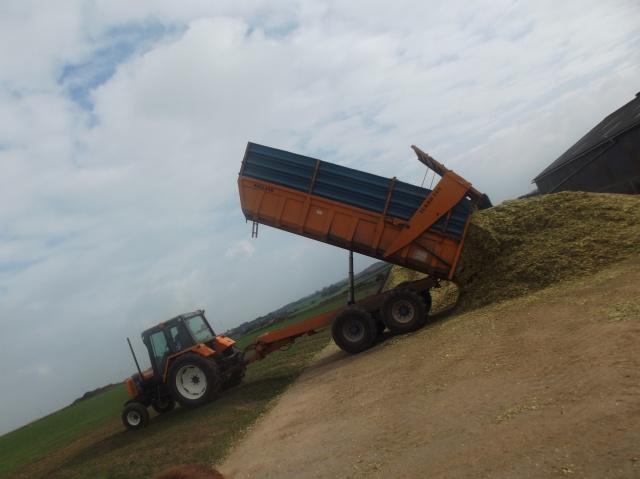 Ensilage de maïs 2011 39057810312TX508