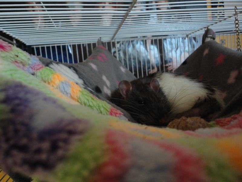 Mousse, Pik&Croq et miss Penny 391260DSC00951
