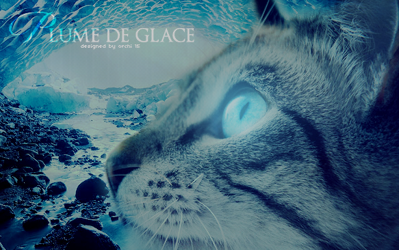 ▼ Orchi' WorkShop ▼ 392895plumedeglace4