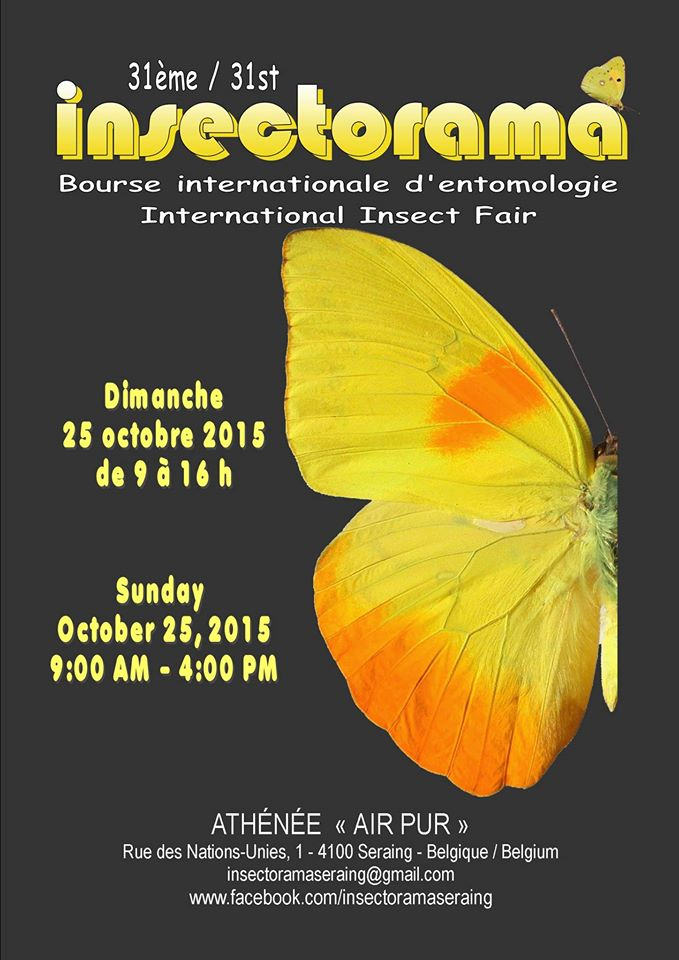 Insectorama Fair Insects Seraing / 25 octobre 2015 393163insectorama