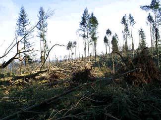 Tempêtes de Décembre 1999:  Ouragans, ou arme climatique? 395322Foret2