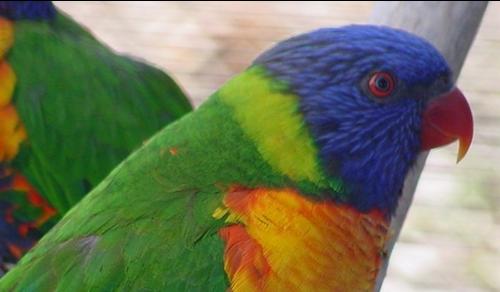 Tubes rapasse et oiseaux 396382Mellmelgibson1e34