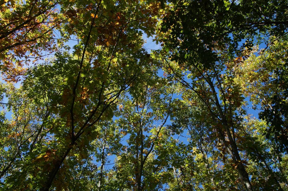 [fil ouvert] la forêt dans tous ses états - Page 14 399074DSC07711