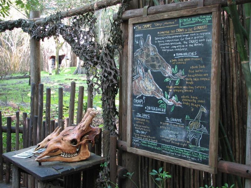 [18-31 octobre 2014] Voyage de noces à Walt Disney World et à Universal - Page 12 400728africa04786192