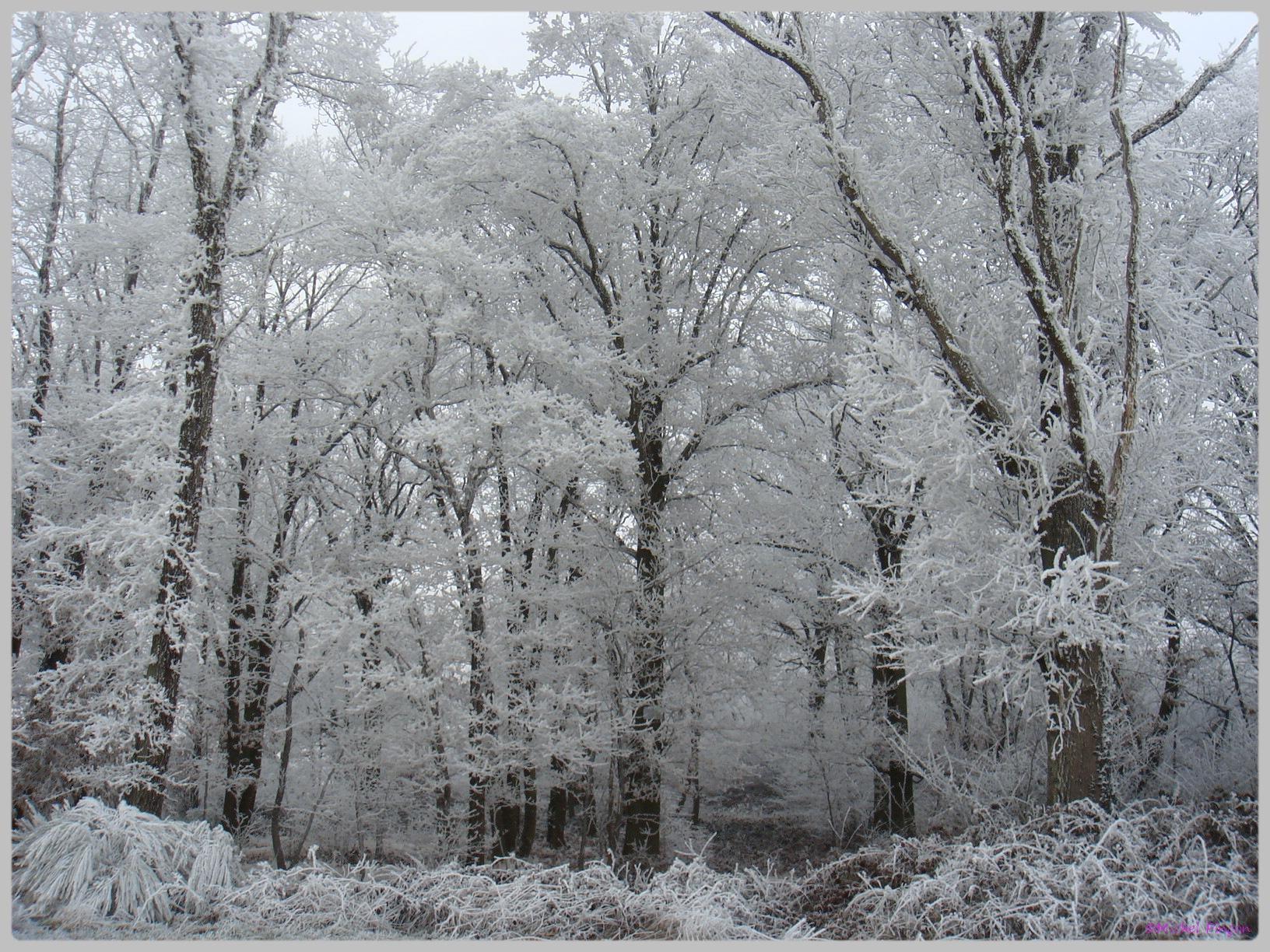 [fil ouvert] la forêt dans tous ses états - Page 12 401438DSC011784