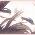 Tsuki no Kioku ~ Souvenir de la Lune 402021heartart