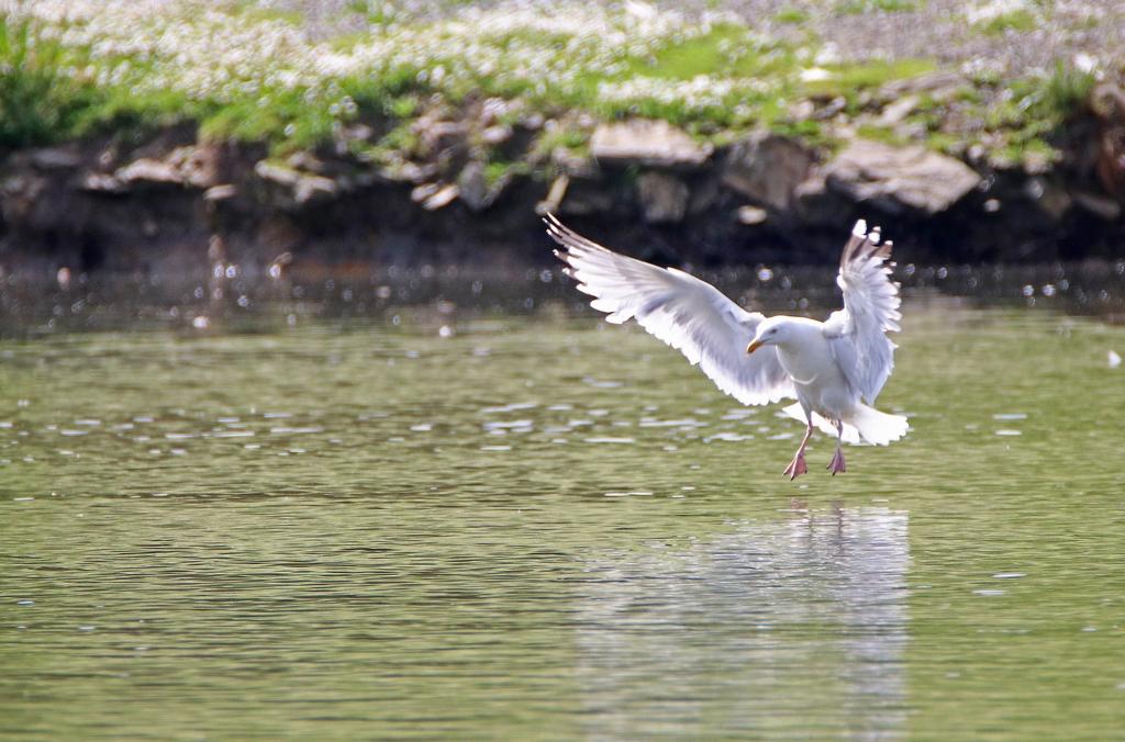 Mes oiseaux 404764re0582Copier