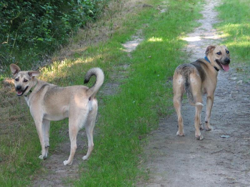 Lila, adorable chienne croisée, née en octobre 2011 405048IMG9521Copie
