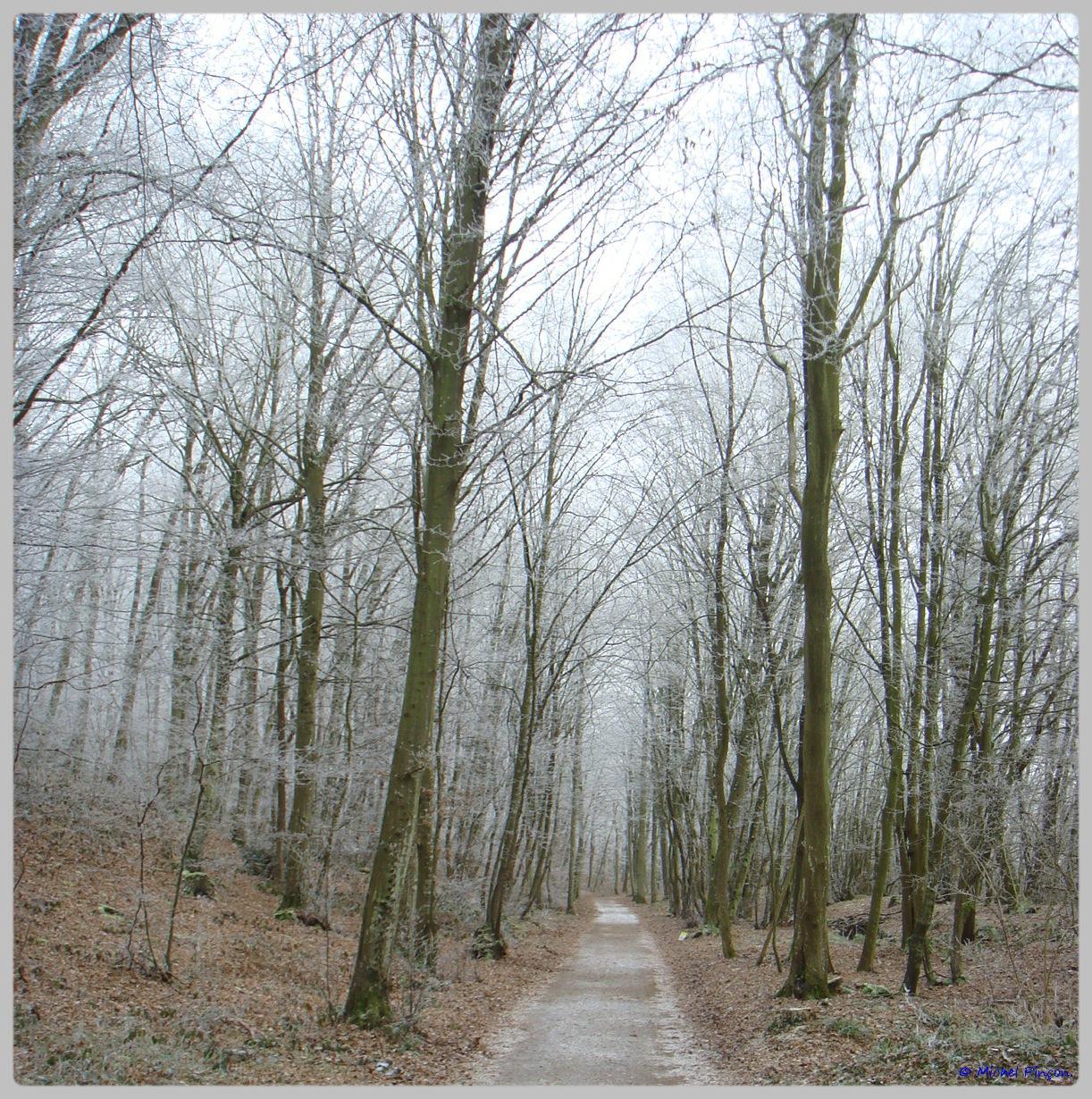 [fil ouvert] la forêt dans tous ses états - Page 11 407157DSC011770