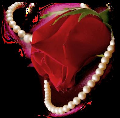 Tubes roses 4146722bc0d9db