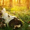 La Lisière de Forêt