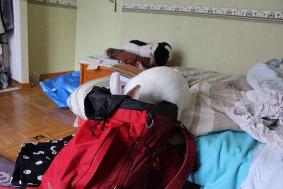 [ADOPTE] Baloo, jeune lapin de laboratoire à adopter 416021baloo5
