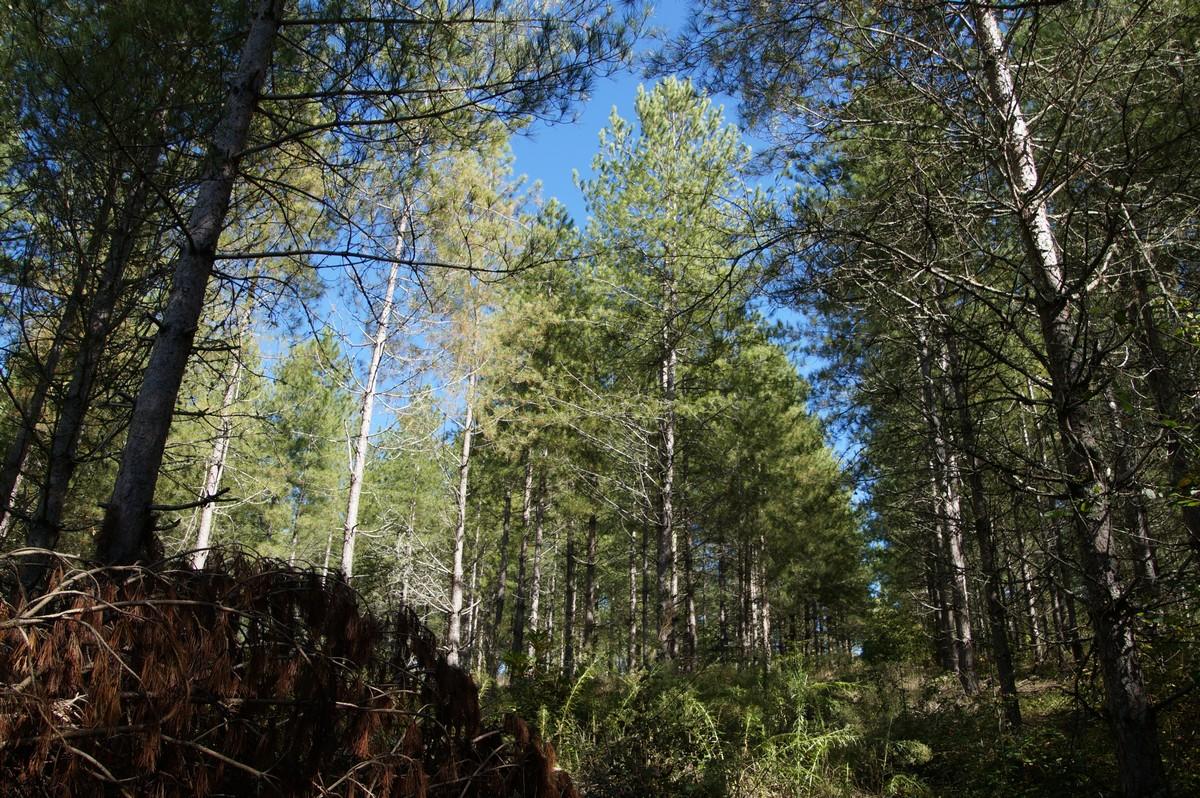 [fil ouvert] la forêt dans tous ses états - Page 14 420562DSC07725