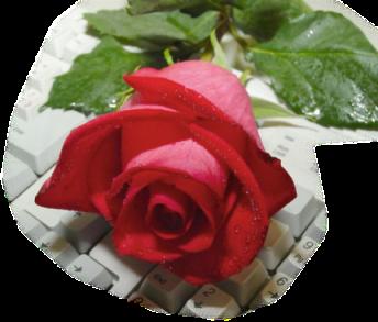 Tubes roses 4210509c2bfc13