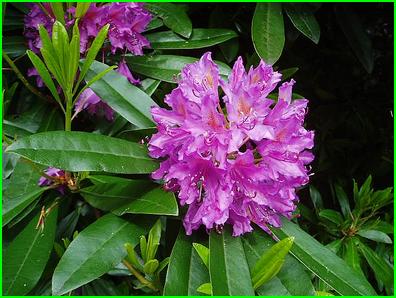 Plantes toxiques ou à risques 426741rho