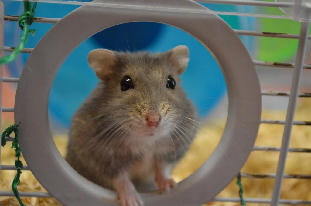 Couleur de cette hamster.. 427094DSC0237