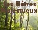 La Forêt des Hêtres Majestueux