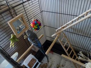 voici la cage de Chouchou 435332P1010601