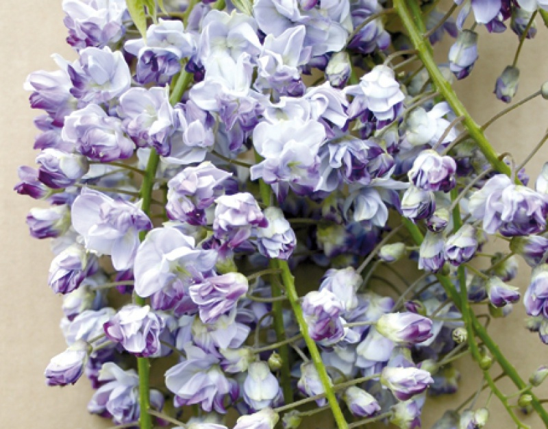 Quel est votre Plante, Arbre, fleur préféré que vous possédez ou non? Si vous n'en aviez qu'une à garder, Laquel/lequel garderiez-vous? 4353611358283107