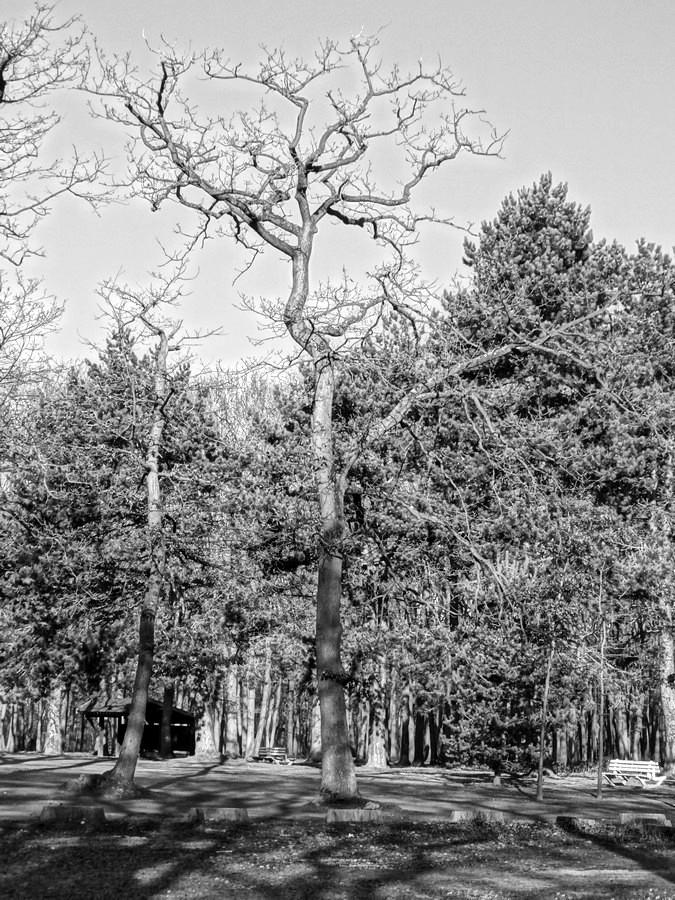 [fil ouvert] la forêt dans tous ses états - Page 13 436980019Copier