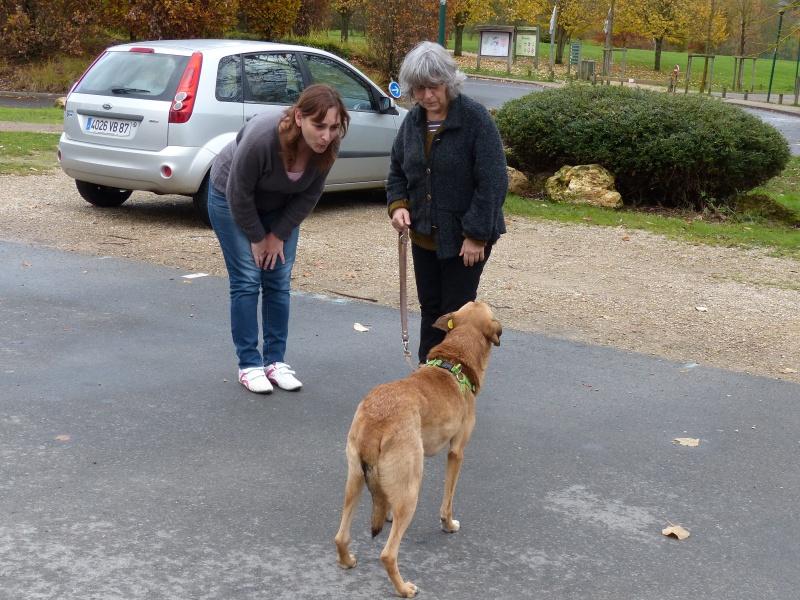 Tzupy, chien de notre quartier, mâle très sociable, né en 2009. 438436P1130264