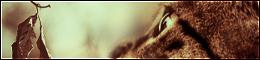 La Guerre des Clans 2013 438973BoutonTopSite