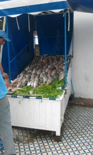 Essaouira.... 445617201208211235181