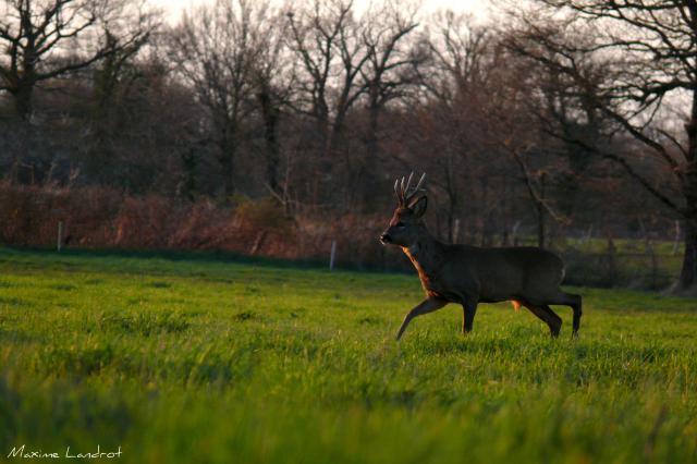 Belles photos d'animaux c'est ici !  447016Perchescontrejour