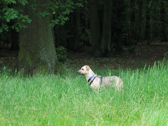Lila, adorable chienne croisée, née en octobre 2011 449356IMG9376