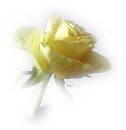 Tubes roses 4498833a43b008