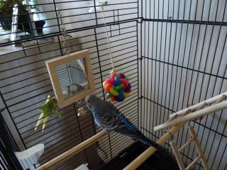 voici la cage de Chouchou 450123P1010598