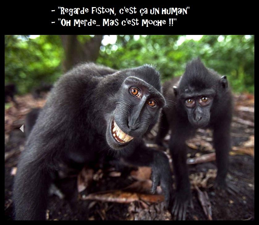 HUMOUR - Drôles de bêtes... - Page 8 451065C0STPB9XEAAYHB8