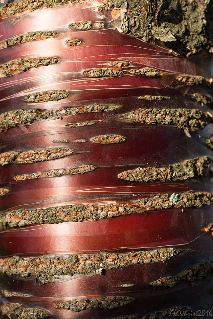 Ecorces d'arbres rares  456044DSC5624